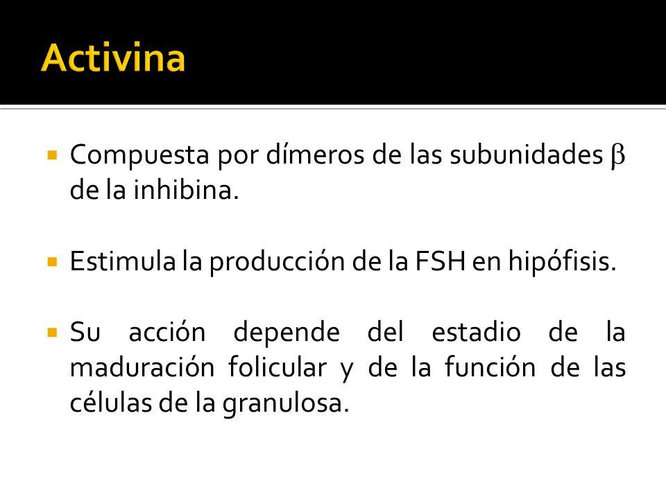 Activina Compuesta por dímeros de las subunidades b de la inhibina.