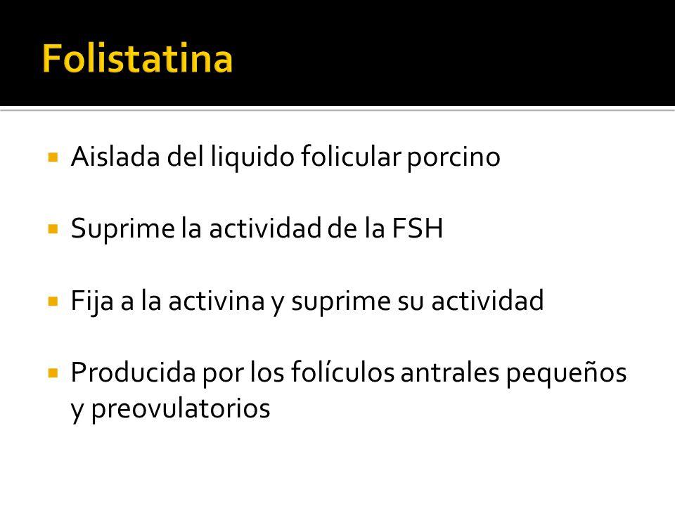 Folistatina Aislada del liquido folicular porcino