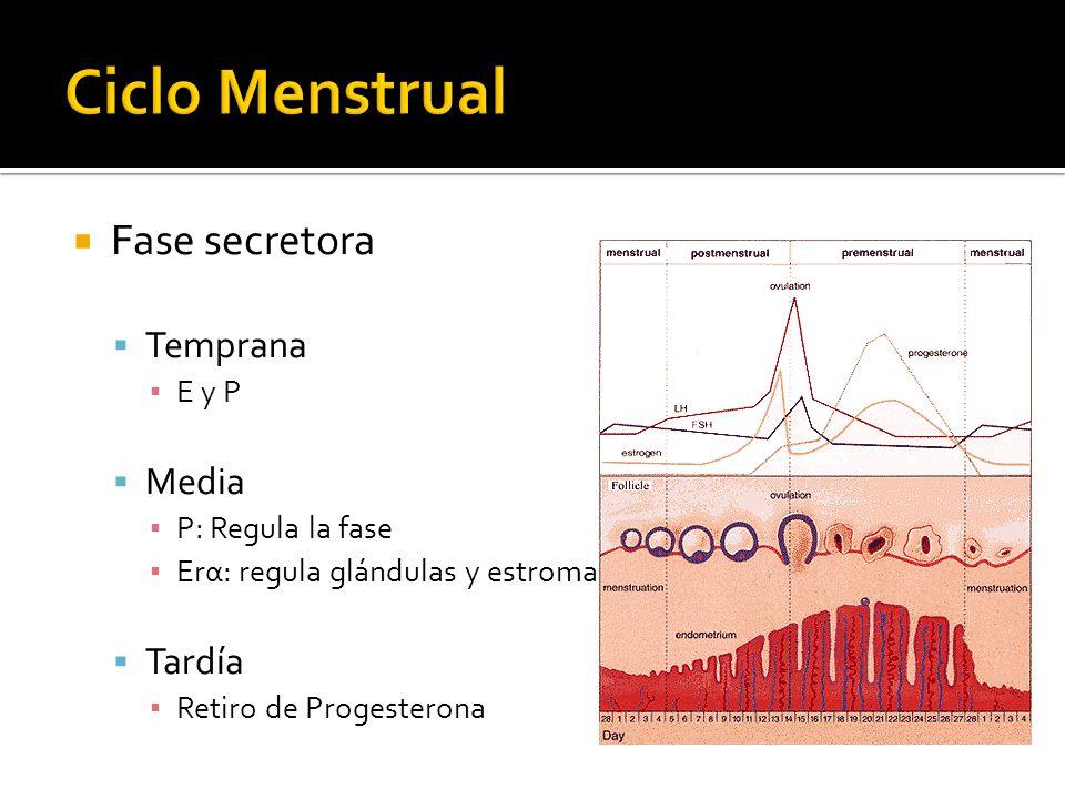 Ciclo Menstrual Fase secretora Temprana Media Tardía E y P