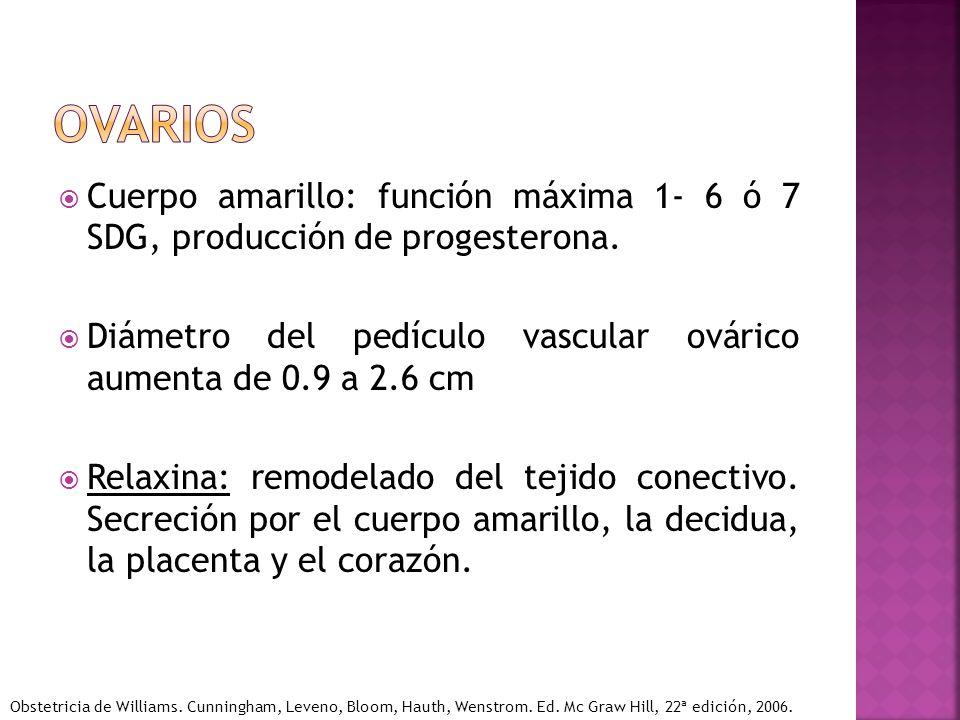 ovarios Cuerpo amarillo: función máxima 1- 6 ó 7 SDG, producción de progesterona. Diámetro del pedículo vascular ovárico aumenta de 0.9 a 2.6 cm.