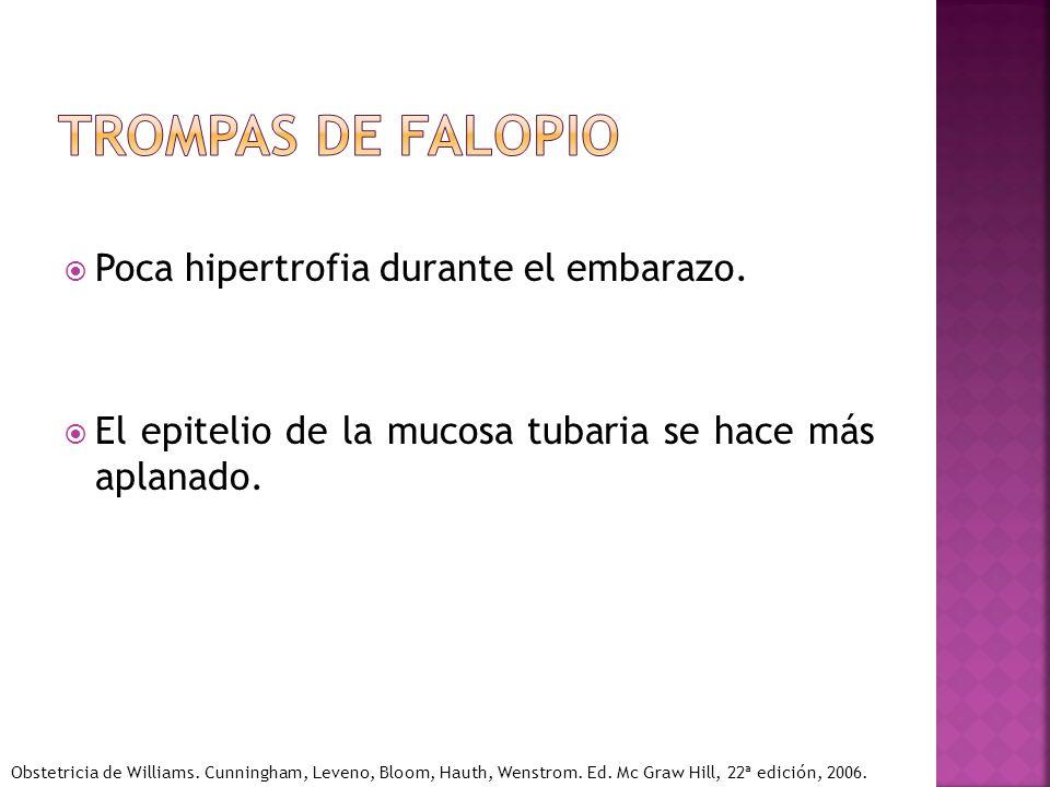 Trompas de falopio Poca hipertrofia durante el embarazo.