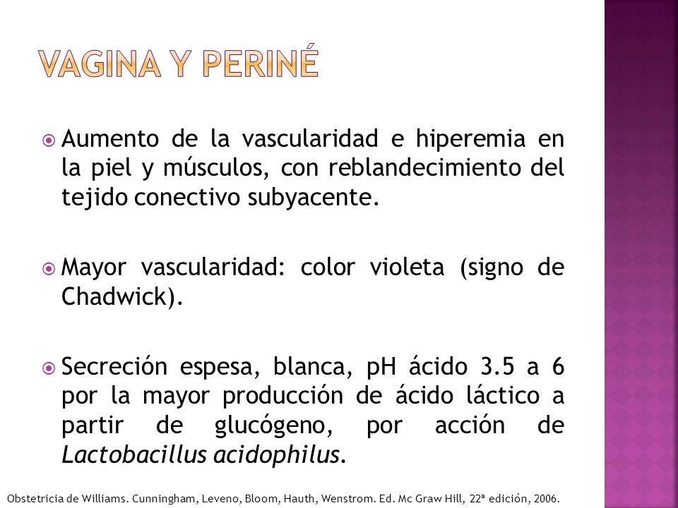 Vagina y periné Aumento de la vascularidad e hiperemia en la piel y músculos, con reblandecimiento del tejido conectivo subyacente.
