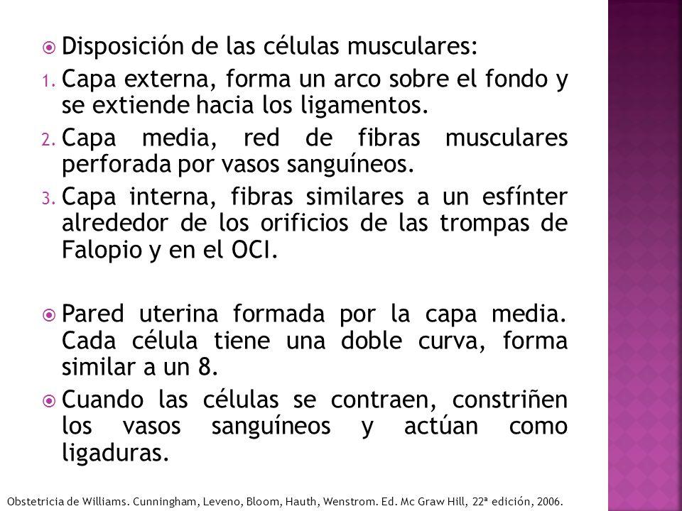 Disposición de las células musculares: