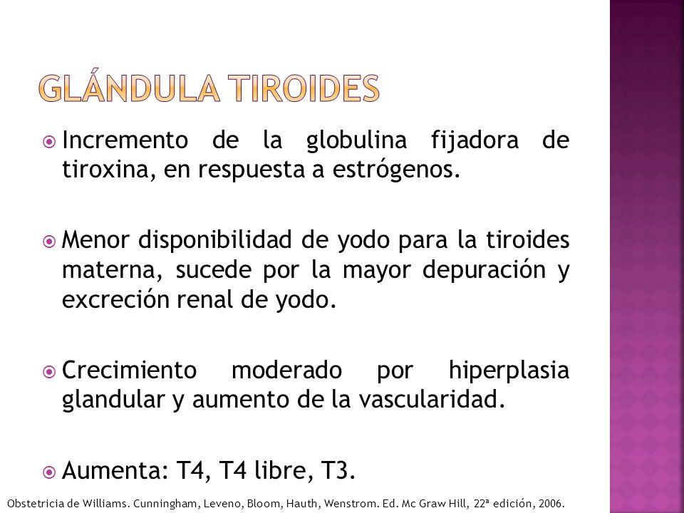 Glándula tiroides Incremento de la globulina fijadora de tiroxina, en respuesta a estrógenos.