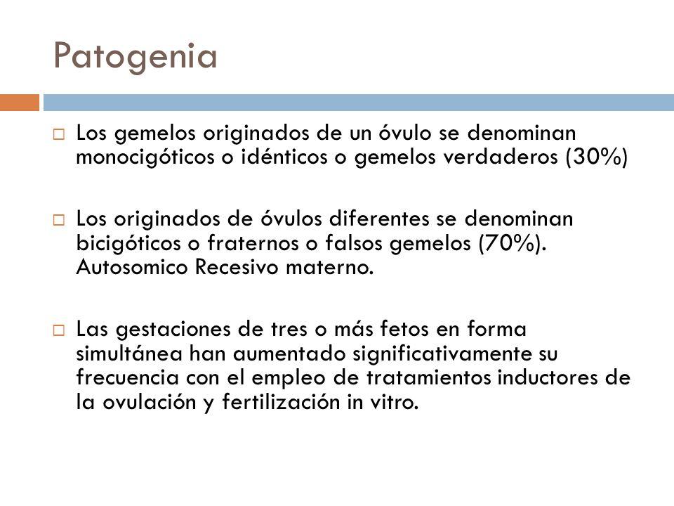 Patogenia Los gemelos originados de un óvulo se denominan monocigóticos o idénticos o gemelos verdaderos (30%)
