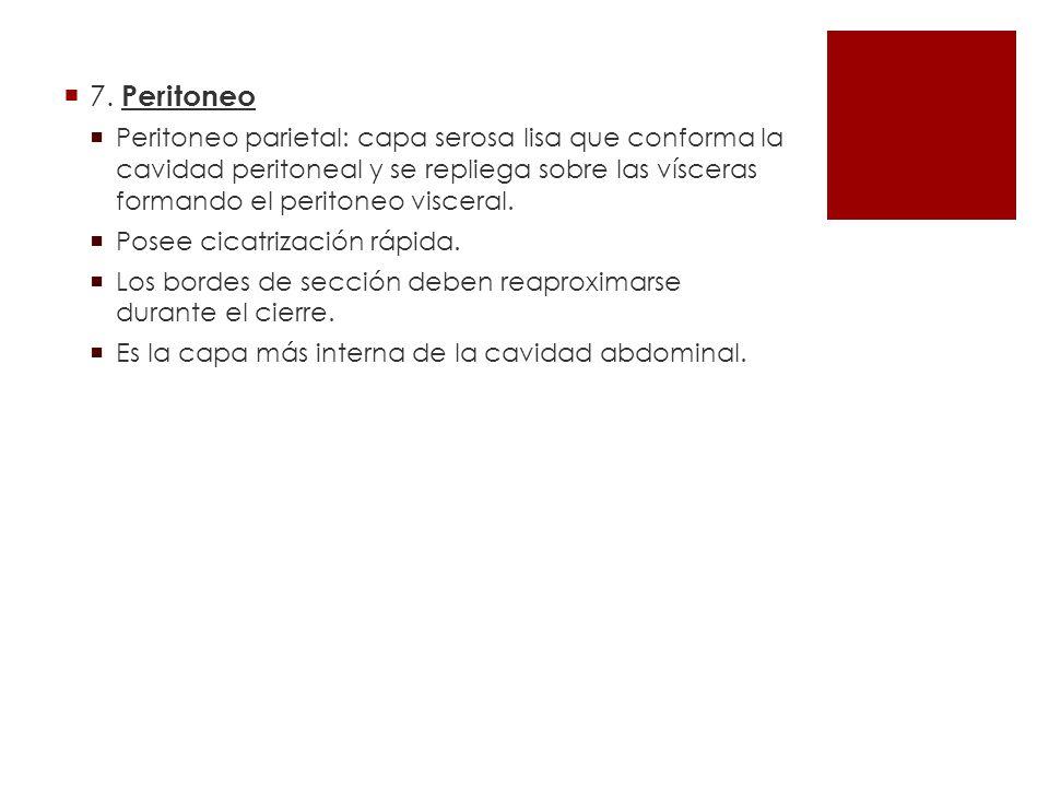 7. Peritoneo