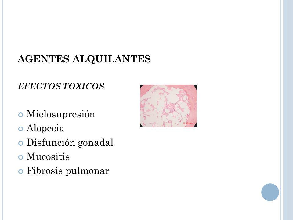 AGENTES ALQUILANTES Mielosupresión Alopecia Disfunción gonadal