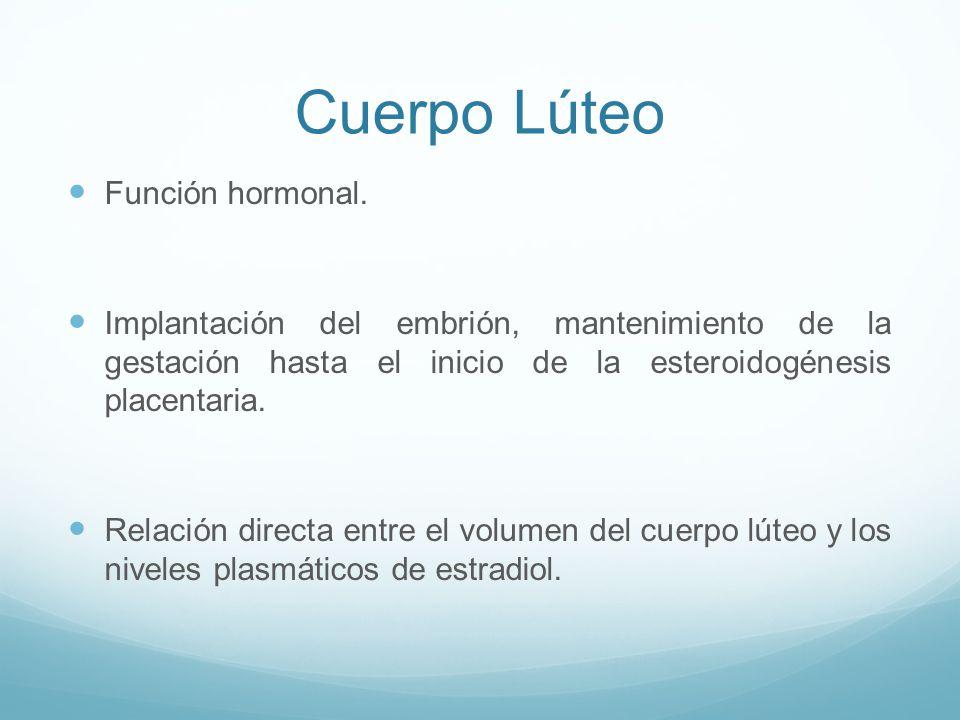 Cuerpo Lúteo Función hormonal.