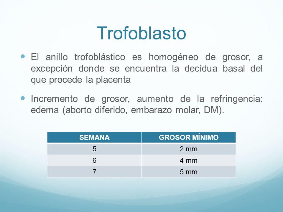 Trofoblasto El anillo trofoblástico es homogéneo de grosor, a excepción donde se encuentra la decidua basal del que procede la placenta.