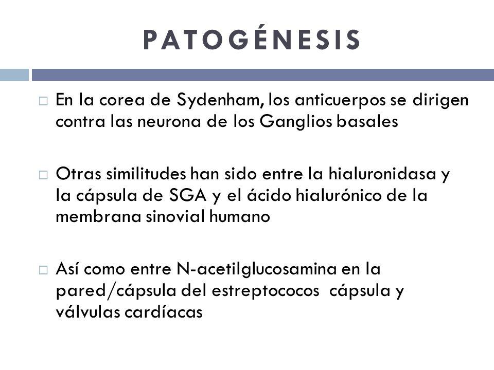 PATOGÉNESIS En la corea de Sydenham, los anticuerpos se dirigen contra las neurona de los Ganglios basales.