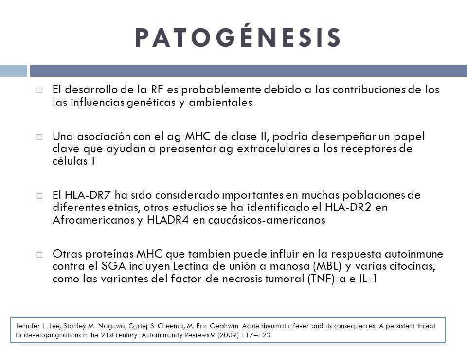 PATOGÉNESIS El desarrollo de la RF es probablemente debido a las contribuciones de los las influencias genéticas y ambientales.