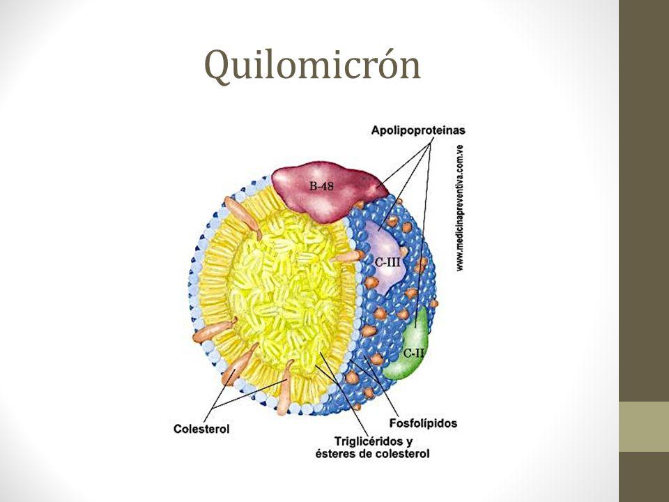 Quilomicrón