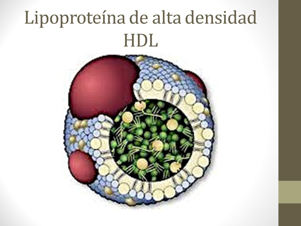 Lipoproteína de alta densidad HDL