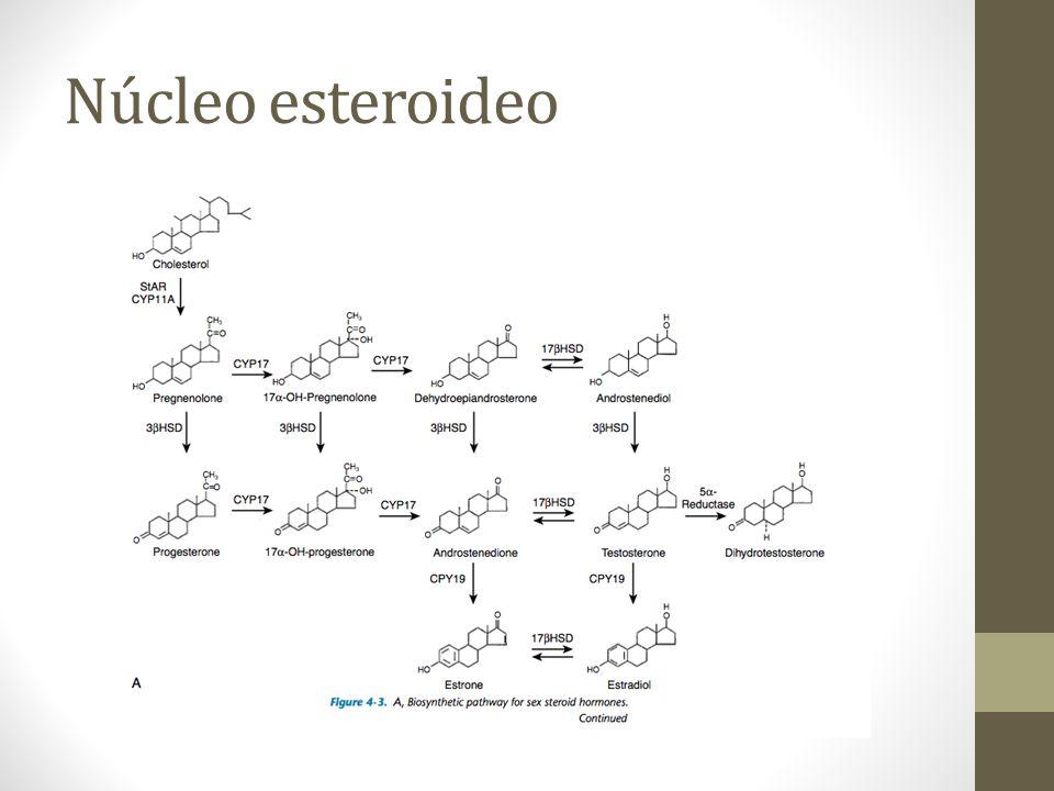 Núcleo esteroideo