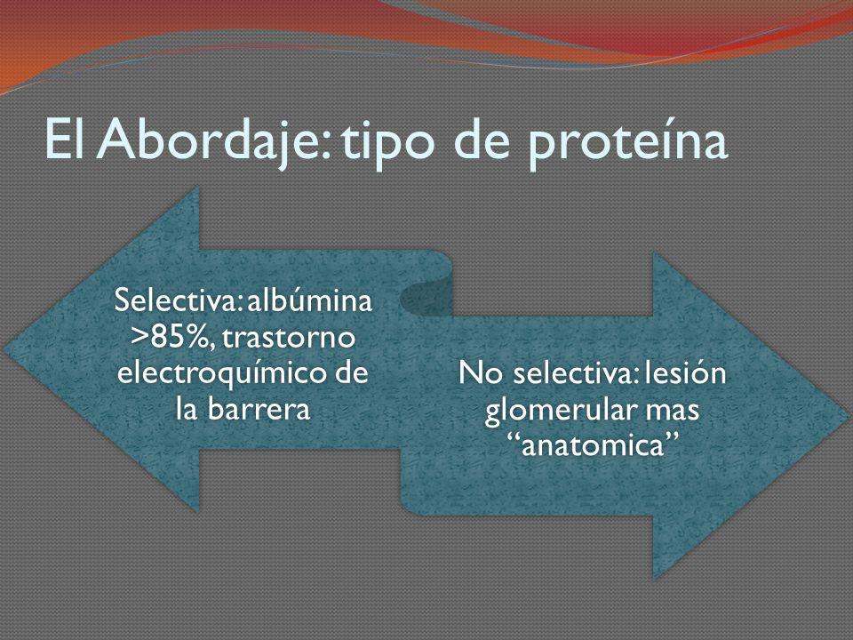 El Abordaje: tipo de proteína