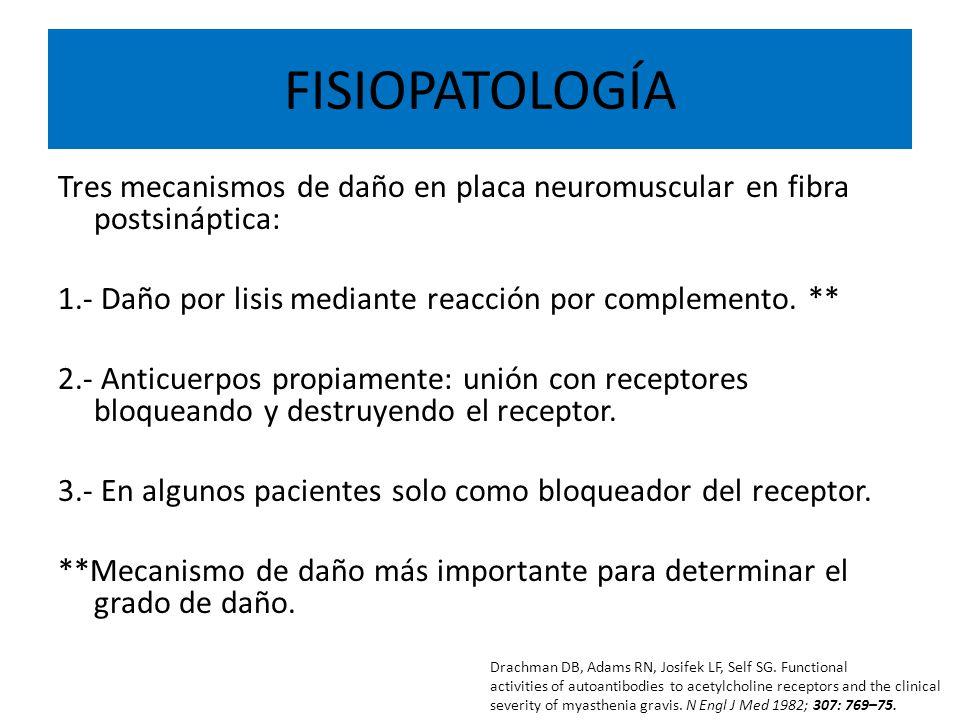 FISIOPATOLOGÍA Tres mecanismos de daño en placa neuromuscular en fibra postsináptica: 1.- Daño por lisis mediante reacción por complemento. **
