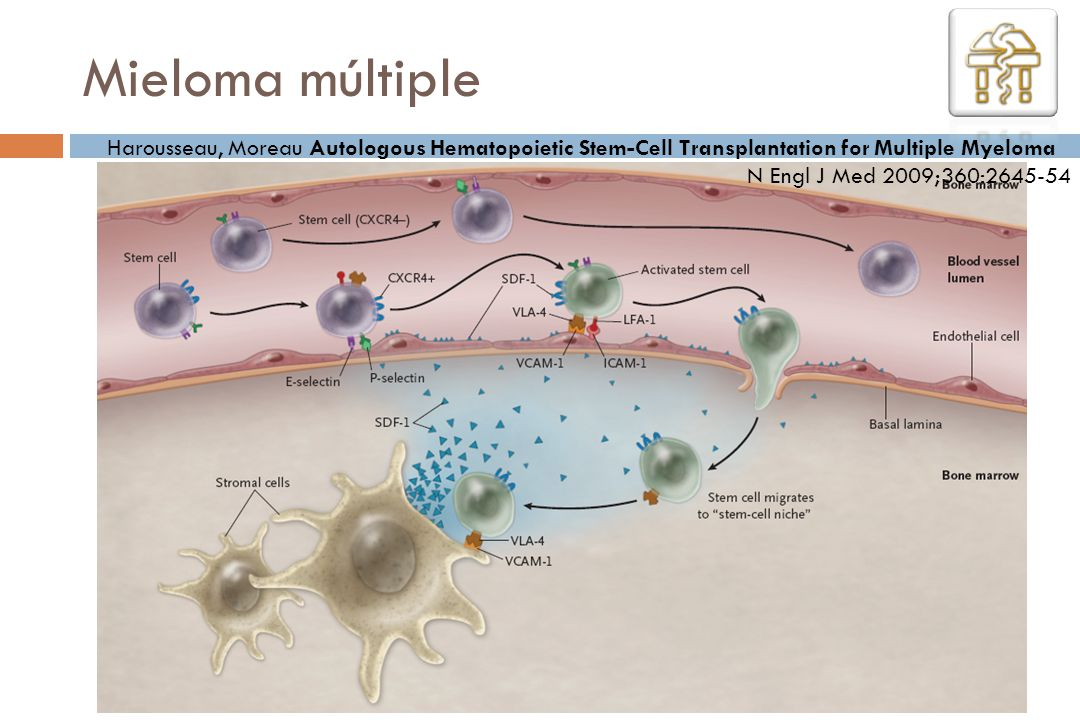 Mieloma múltiple Harousseau, Moreau Autologous Hematopoietic Stem-Cell Transplantation for Multiple Myeloma.