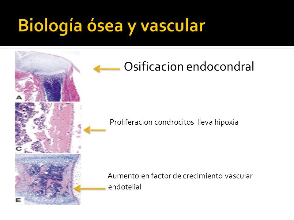 Biología ósea y vascular