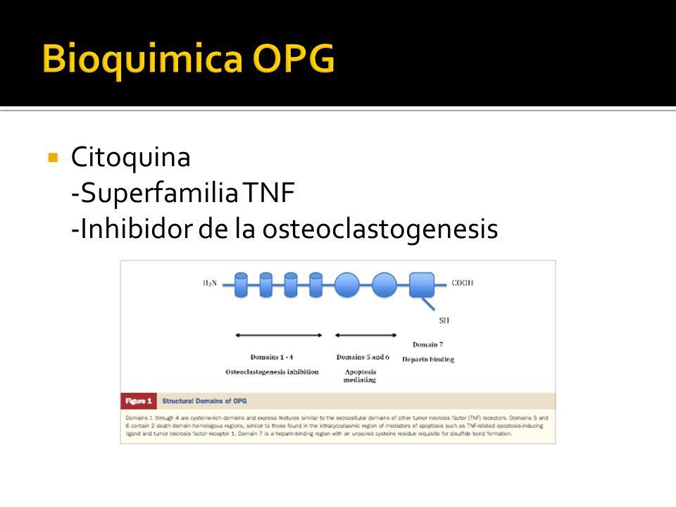 Bioquimica OPG Citoquina -Superfamilia TNF