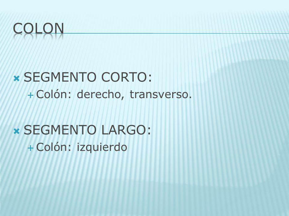 COLON SEGMENTO CORTO: SEGMENTO LARGO: Colón: derecho, transverso.