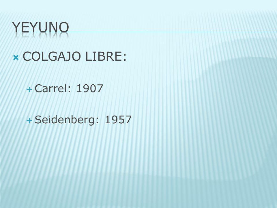 YEYUNO COLGAJO LIBRE: Carrel: 1907 Seidenberg: 1957
