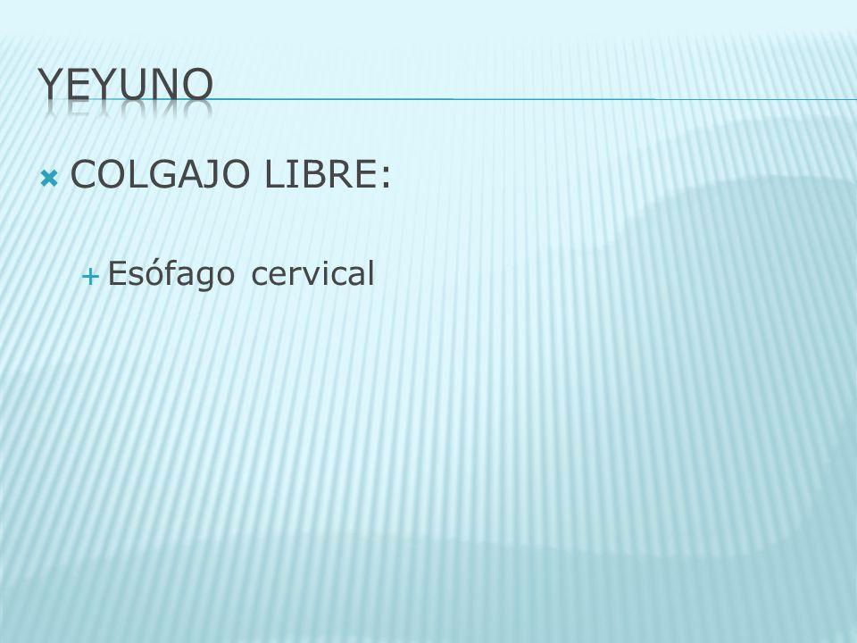 YEYUNO COLGAJO LIBRE: Esófago cervical