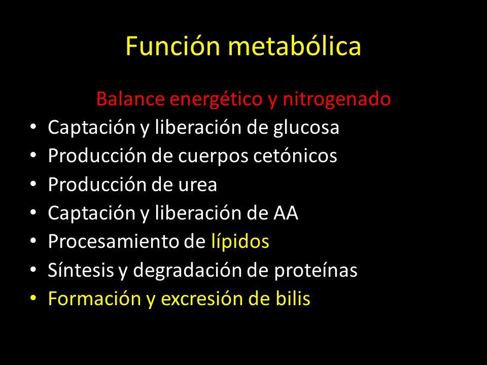 Balance energético y nitrogenado