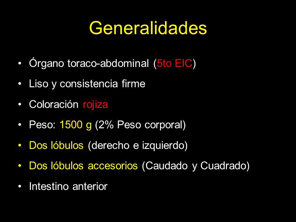 Generalidades Órgano toraco-abdominal (5to EIC)