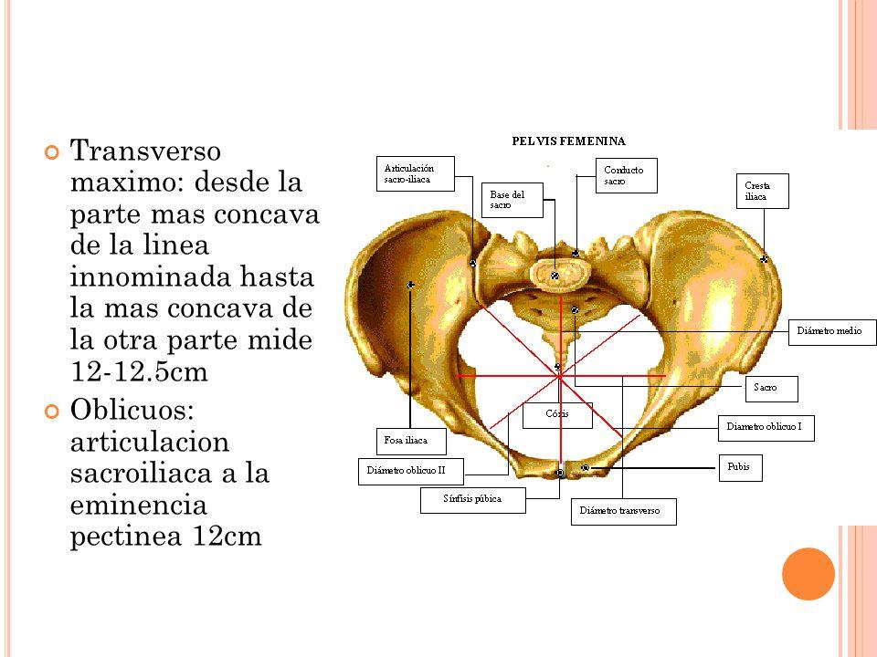 Transverso maximo: desde la parte mas concava de la linea innominada hasta la mas concava de la otra parte mide 12-12.5cm