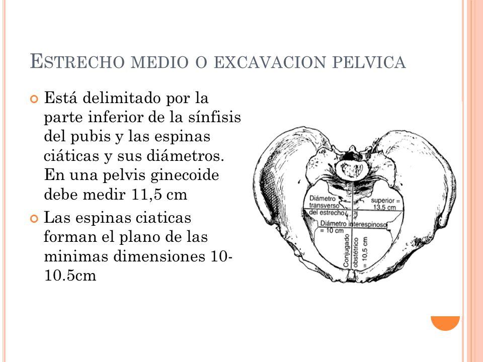 Estrecho medio o excavacion pelvica