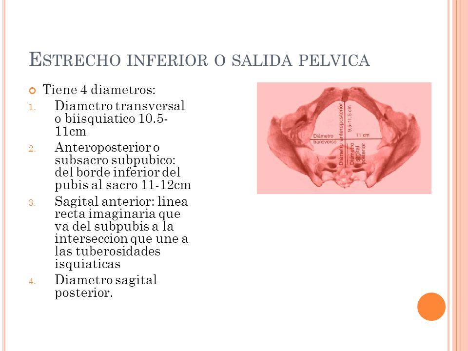Estrecho inferior o salida pelvica