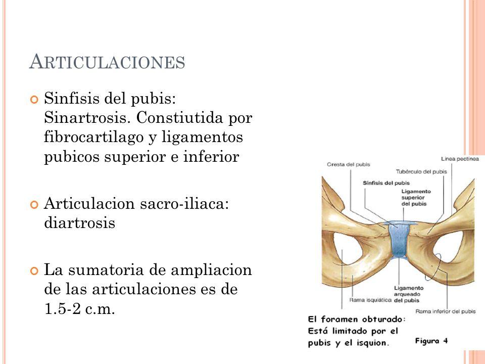 Articulaciones Sinfisis del pubis: Sinartrosis. Constiutida por fibrocartilago y ligamentos pubicos superior e inferior.