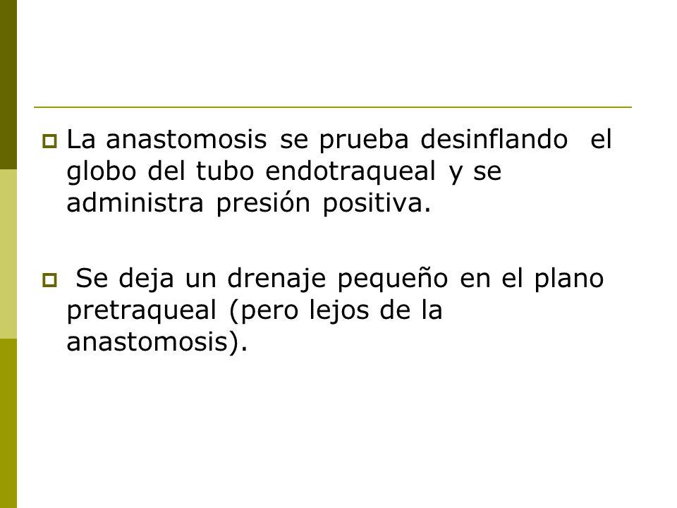 La anastomosis se prueba desinflando el globo del tubo endotraqueal y se administra presión positiva.