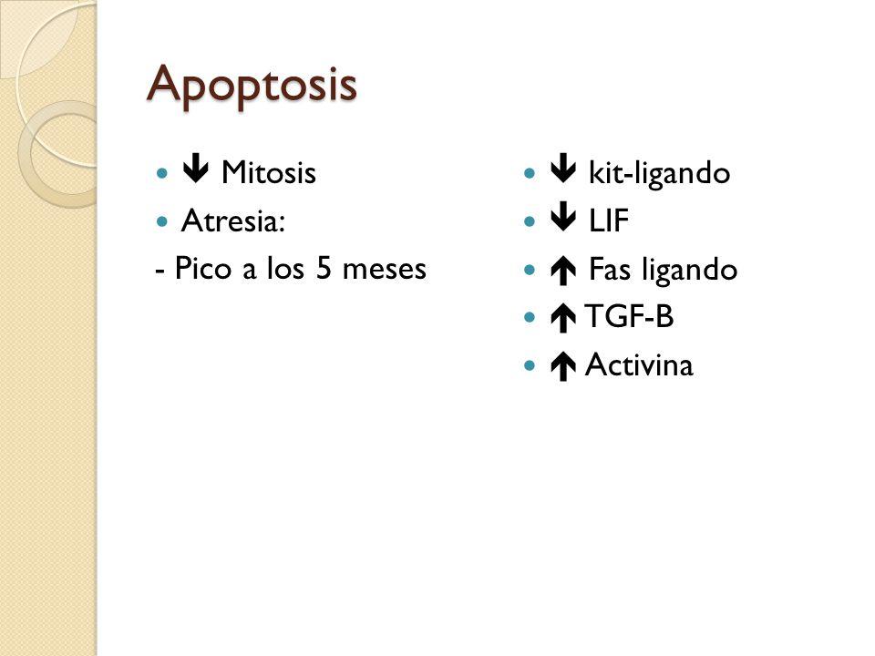 Apoptosis  Mitosis Atresia: - Pico a los 5 meses  kit-ligando  LIF