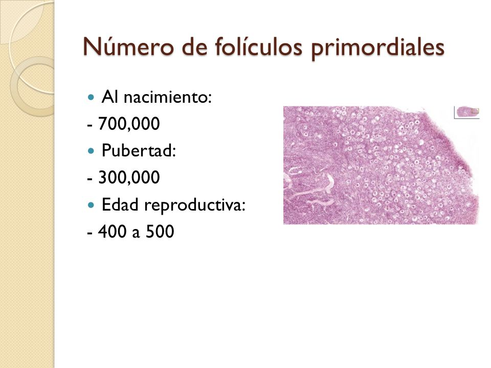 Número de folículos primordiales