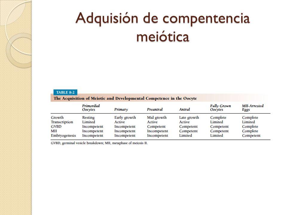 Adquisión de compentencia meiótica