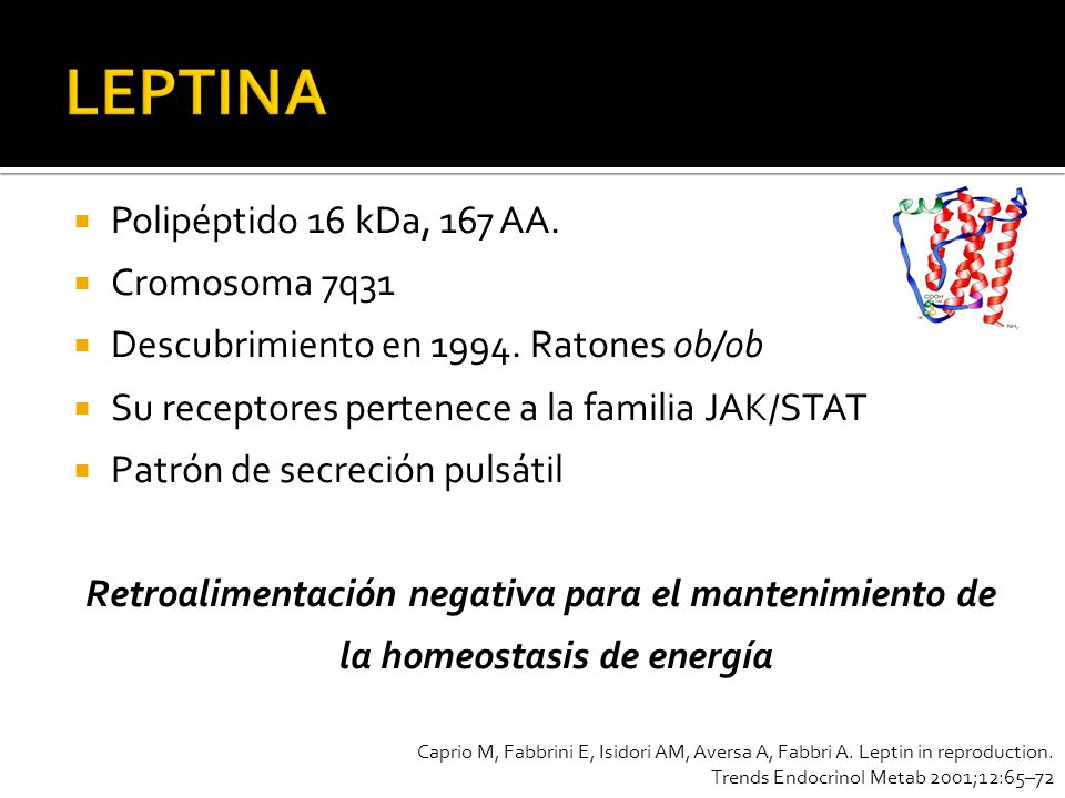 LEPTINA Polipéptido 16 kDa, 167 AA. Cromosoma 7q31
