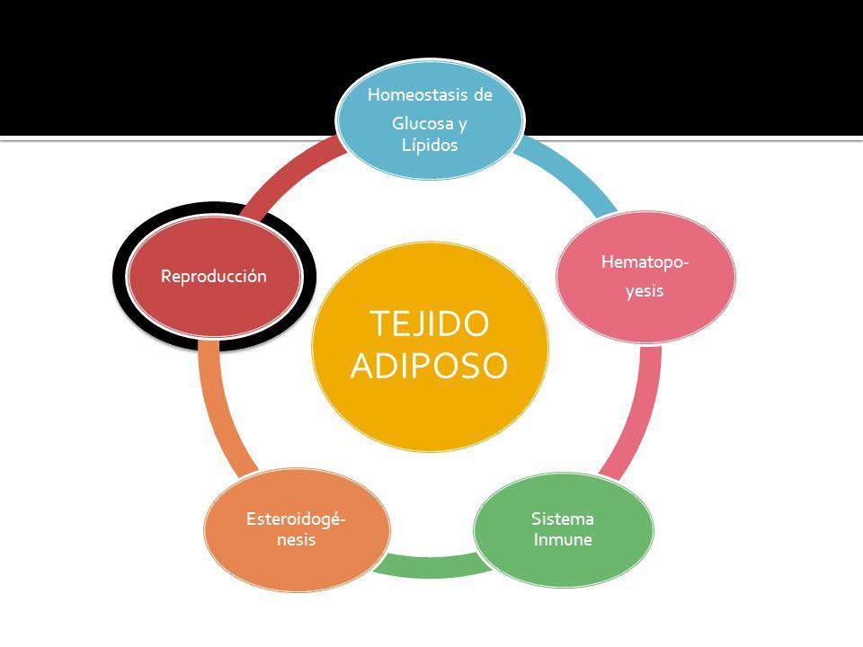 TEJIDO ADIPOSO Homeostasis de Glucosa y Lípidos Hematopo- Reproducción