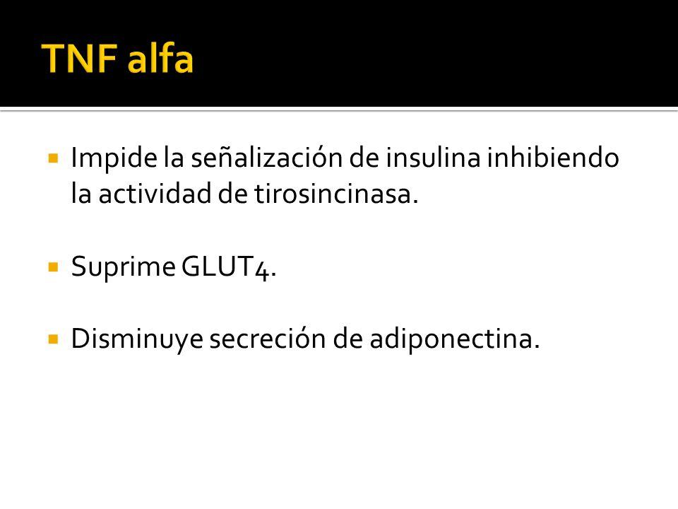 TNF alfa Impide la señalización de insulina inhibiendo la actividad de tirosincinasa. Suprime GLUT4.