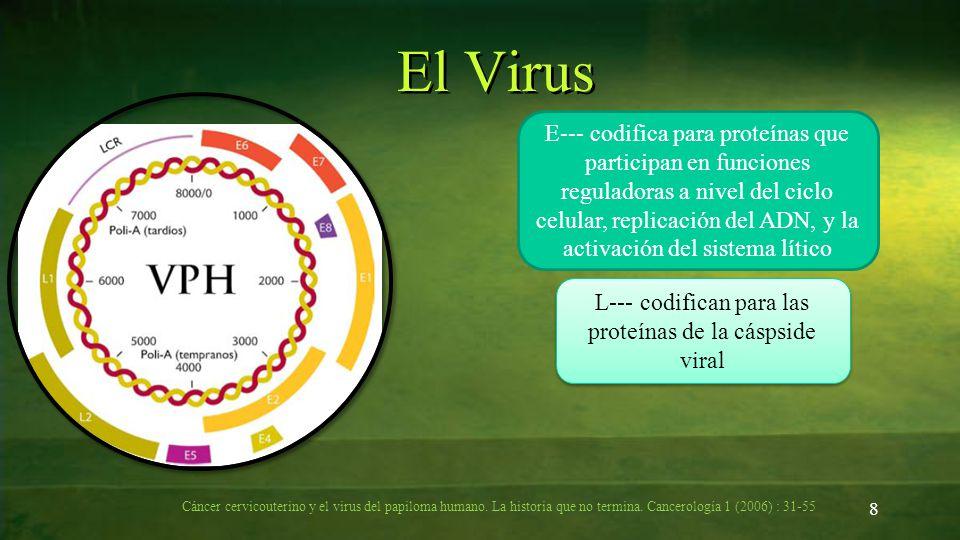L--- codifican para las proteínas de la cáspside viral