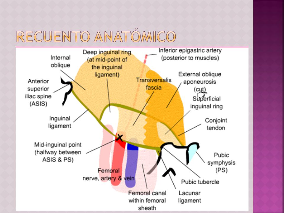 Recuento anatómico