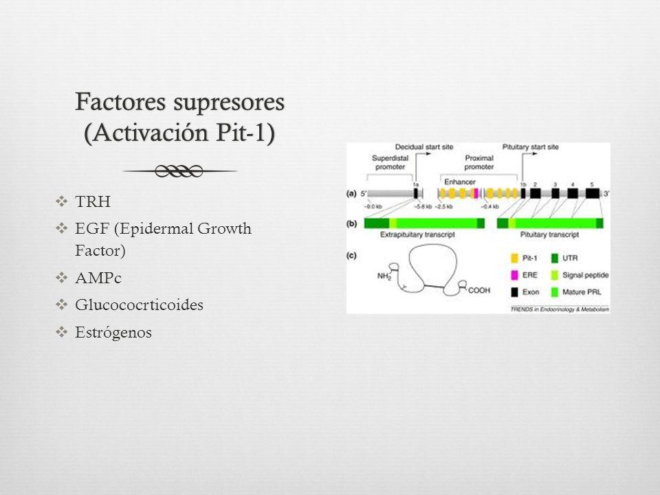 Factores supresores (Activación Pit-1)
