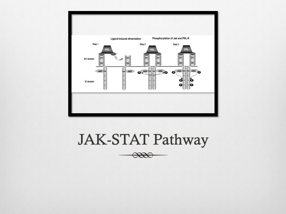 JAK-STAT Pathway