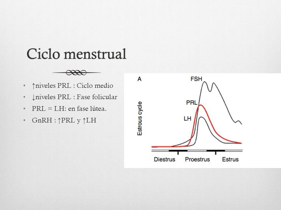 Ciclo menstrual ↑niveles PRL : Ciclo medio
