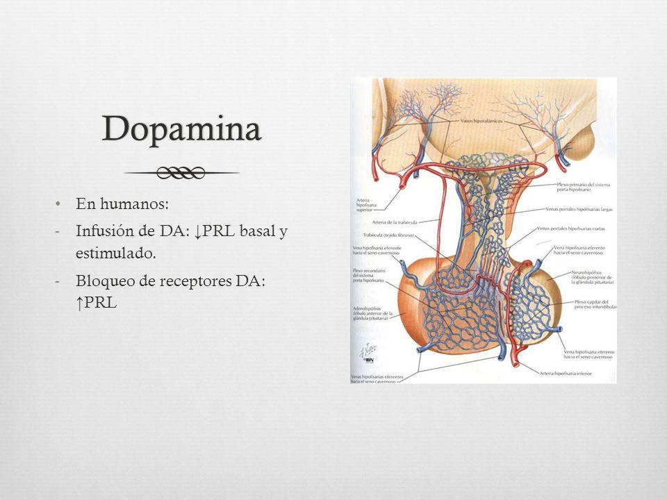 Dopamina En humanos: Infusión de DA: ↓PRL basal y estimulado.