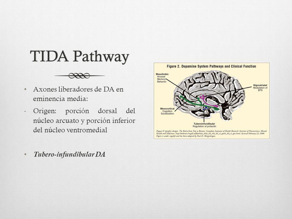TIDA Pathway Axones liberadores de DA en eminencia media:
