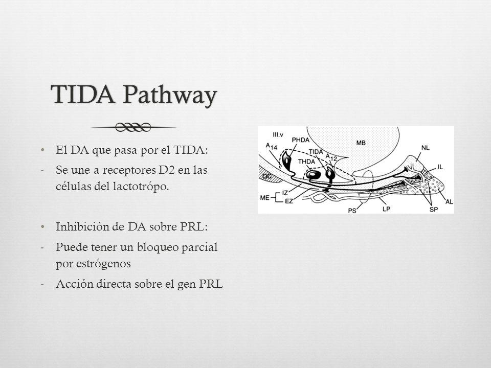 TIDA Pathway El DA que pasa por el TIDA: