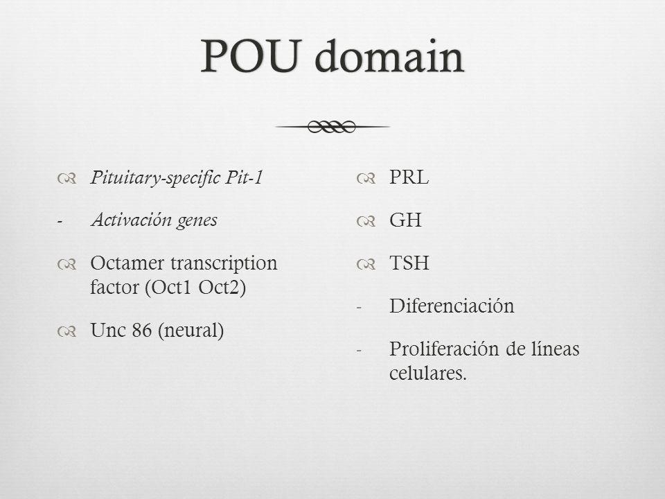 POU domain Pituitary-specific Pit-1 - Activación genes