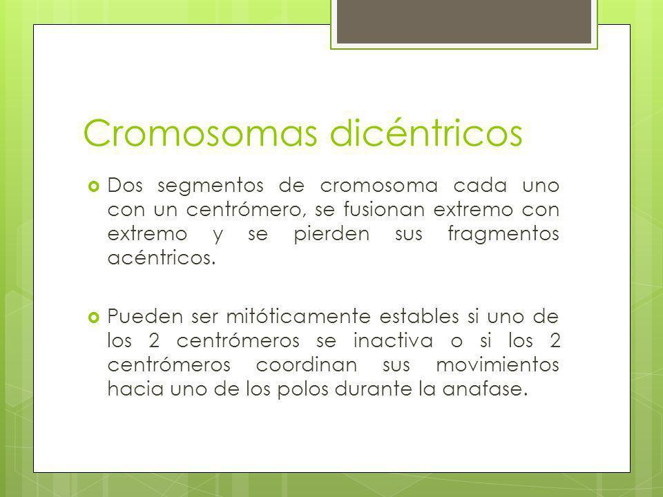 Cromosomas dicéntricos