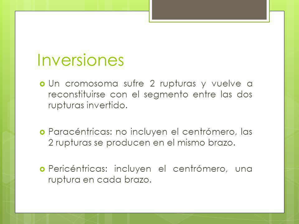 Inversiones Un cromosoma sufre 2 rupturas y vuelve a reconstituirse con el segmento entre las dos rupturas invertido.